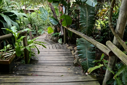 jungle all around
