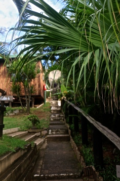 Palmtrees everywhere